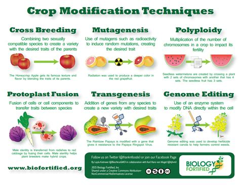 Modification Utation by Genetically Modified Foods Activities To Print