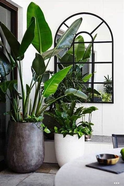 in door plants pot video three four plants argements best 20 decorate a mirror ideas on pinterest