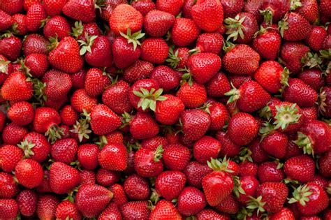 Lagerung Erdbeeren by Erdbeeren Lagern 187 Ein 220 Berblick 252 Ber Die M 246 Glichkeiten