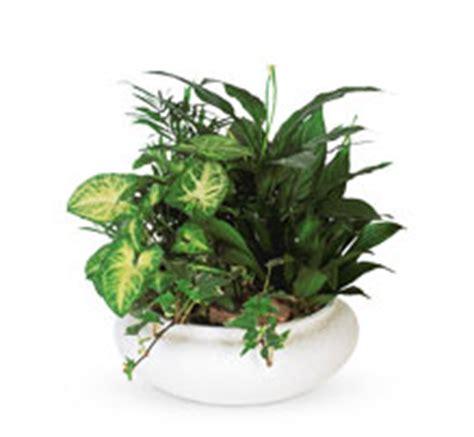 common house plants for funerals order funeral flowers floral arrangements teleflora