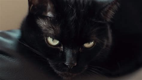 Meaning Of Black Cat At Your Door by Black Cat Looking At To Replicate Look Stock Footage 5953307