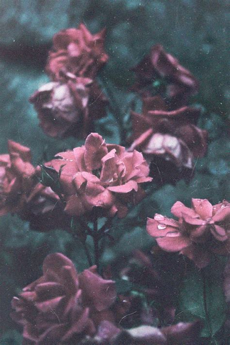 wallpaper rain pink red cold sad beautiful grunge green water drop flowers