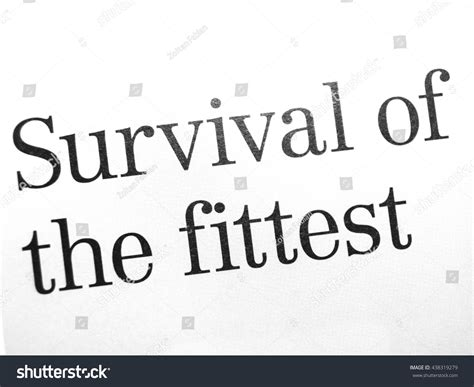 Survival Of The Fittest Essay by Paper Up Stock Photo 438319279