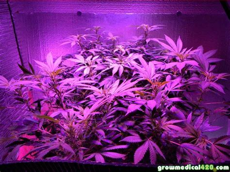 plants that grow in dark rooms 100 plants that grow in dark rooms artificial light