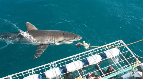 boat tours close to me shark cage diving adventure medan toursmedan tours