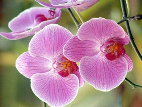 imagenes de flores naturales orquideas 7 tips para cuidar tus orqu 237 deas denucio productos