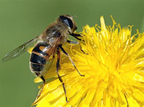 minicuentos de abejas y 8448838475 semillas solares 191 les pasar 193 algo a las abejas