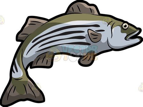 bass clip a striped bass clipart by vector