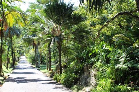 Seychelles Botanical Garden 7 Picture Of Seychelles National Botanical Gardens