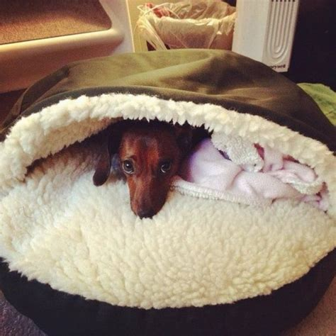 dachshund bed dachshund bed mine would love it for the dogs
