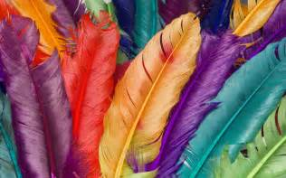 beautiful feathers wallpapers and pictures one hd