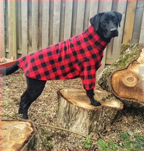 big dogs clothing large clothes rebel wag custom apparel for dogs of all sizes