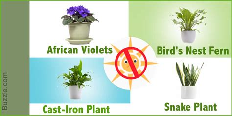 which plants can survive without sunlight dress up your home with these indoor plants that don t