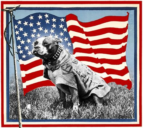 Sgt Stubby An Unlikely Best 25 Sergeant Stubby Ideas On Pitbull Wiki Who Fought In Ww1 And War Dogs