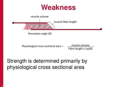 cross sectional area of muscle recognising features weakness