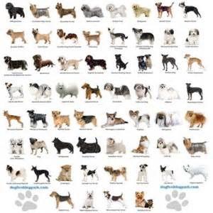 Types of dogs dog breeds dogs and small dog breeds