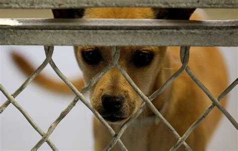 shelters near me animal shelters near me open today free image