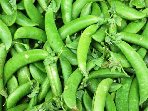 r beans vegetables free stock photos rgbstock free stock images green