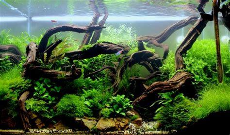 wood for aquascaping 173 best aquarium scape images on pinterest
