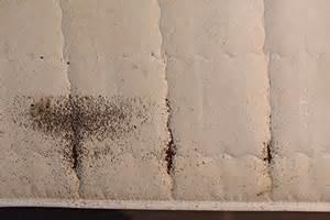 wie bekommt blutflecken aus der matratze bettwanzen erkennen kammerj 228 ger zeigt wie