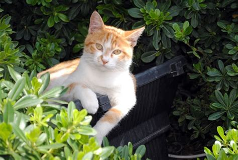 how to keep cats out of flower beds how to keep cats out of flower beds layer the top of the