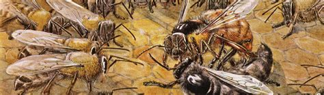 Loyalty Nearly Killed My Beehive - Issue 16: Nothingness ... Royal Jelly Roald Dahl