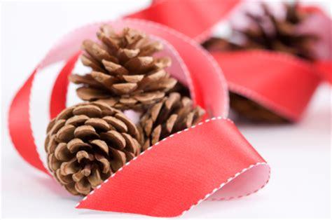 how to prepare preserve pine cones tipnut com