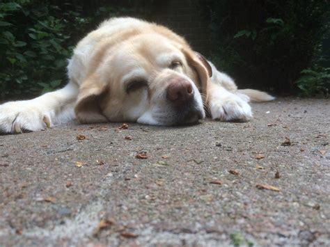 when to euthanize an how to when it s time to euthanize your pet simplemost