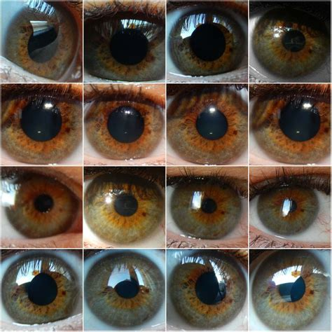 the color hazel 242 best hazel mix of different colors in one