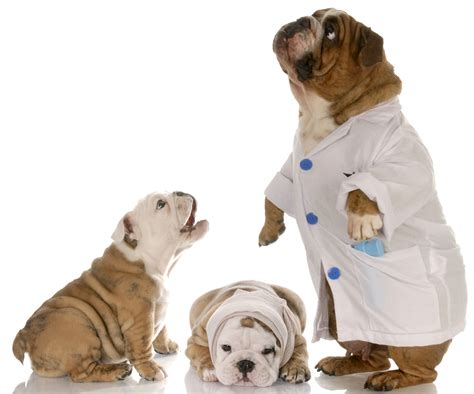 puppy doctor i m a health care reporter here s how i shop for health insurance vox