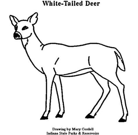 doe deer coloring pages key deer coloring pages john deere coloring pages