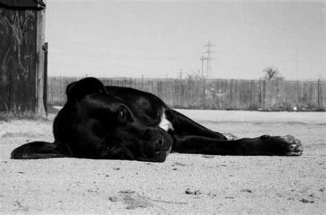 imagenes artisticas blanco y negro retratos animales fotografia fotos de mascotas en blanco