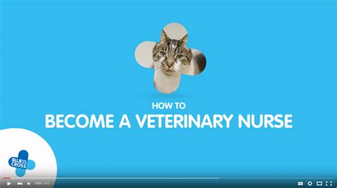How To Become A by How To Become A Veterinary And