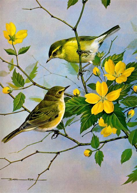 birds painting symphony of inspiring birds quotes beautiful birds