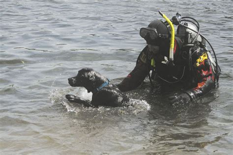 golden retriever rescue anchorage search dogs for underwater recovery local news stories frontiersman
