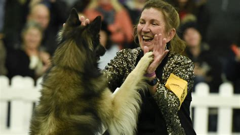 what channel is the westminster show on 2016 westminster show one results hound herding and non sporting