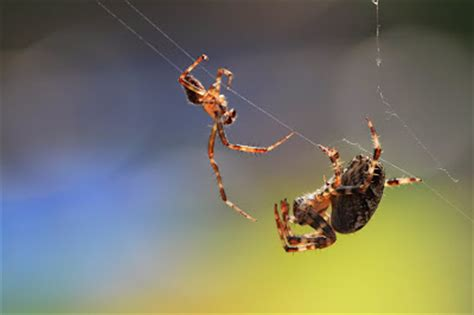 Garden Spider Spiderlings Travelmarx The Spider And The Spiderlings
