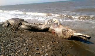 Home Made Boat Blind Mysterious Giant Sea Creature Found Washed Up On Russian