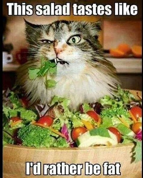 Salad Meme - top 30 funny cat memes quotes words sayings