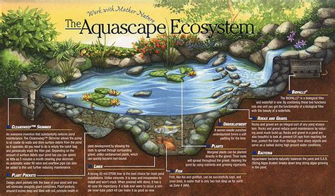 Certified Aquascape Contractor Cac Pond Builder Watergarden Waterfall Bellevue