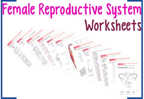 The Reproductive System Worksheet by Reproductive System Worksheets Bundle By Uk Teaching