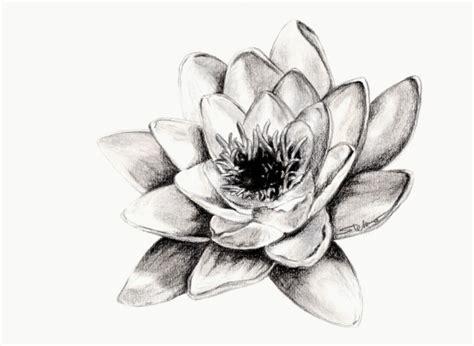 disegni a matita fiori disegni a matita di fiori 28 images disegno ibisco 1