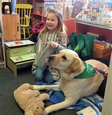 for therapy dogs welcome to therapy dogs of vermont serving vt beyond