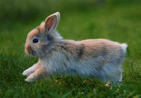 minicuentos de conejos y la alimentaci 243 n del conejo 161 todo lo que debes saber sobre