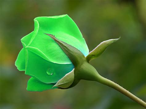 beautiful green color flower shop green flower