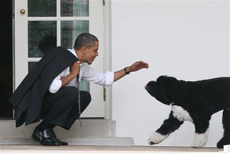 dogs in the white house all the presidents dogs from george washington s hounds to bo and sunny obama