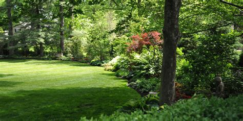 pin woodland landscaping on pinterest