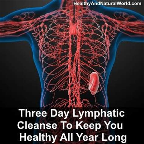 Lymphatic System Detox Drink 25 best ideas about lymphatic system on