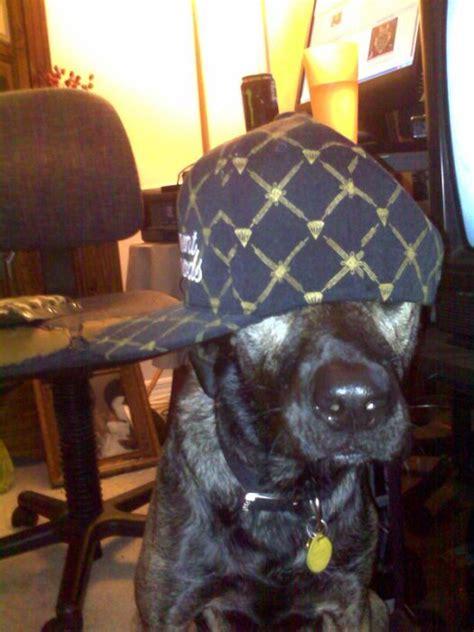 gangsta dogs  pics