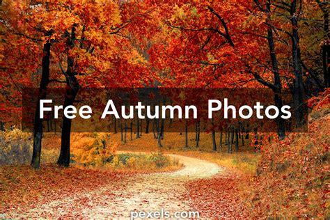 free pictures free stock photos of autumn 183 pexels